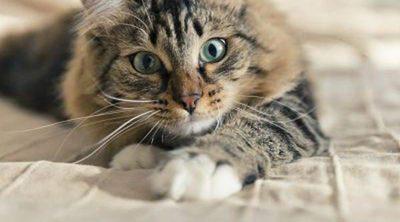 9 formas en la que los gatos te ayudan a tener mejor salud
