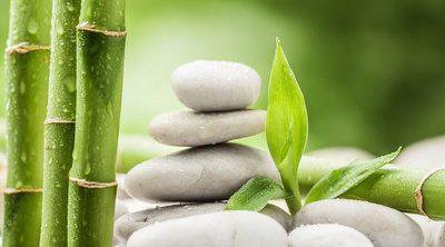 Conoce las propiedades del bambú para tu salud