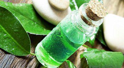 Beneficios del aceite del árbol de té en tu vida