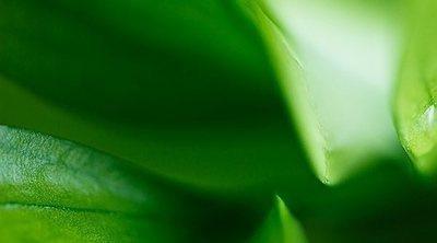 Cómo el verde afecta a tu salud emocional