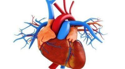 Cuál es la función de la arteria pulmonar en el cuerpo