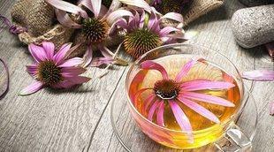Ventajas y desventajas de tomar té de equinácea