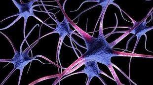 El papel de las neuronas en el sistema nervioso