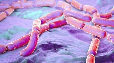 Carbunco: una enfermedad bacteriana poco frecuente