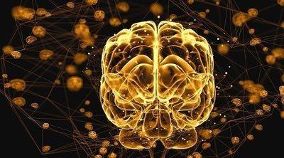 Hasta qué edad se generan nuevas neuronas