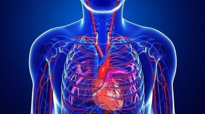 Cómo evitar la ateroesclerosis o endurecimiento de las arterias