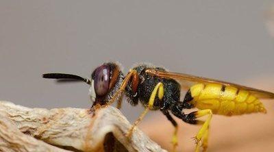 Cómo saber que insecto te ha picado